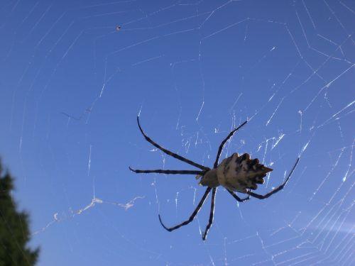 spider arachnoid spider phobia