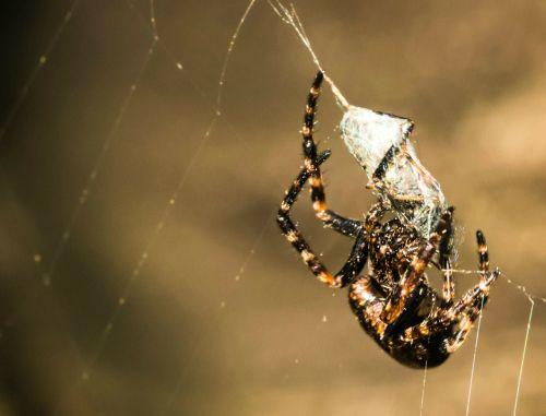 spider network prey