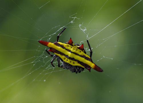 spider the game hanoi