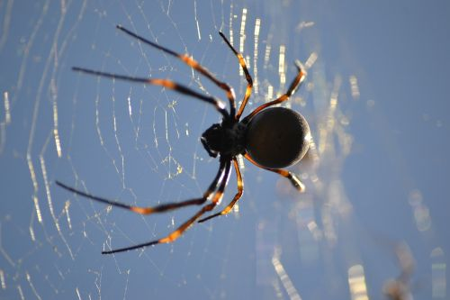 spider web arachnid