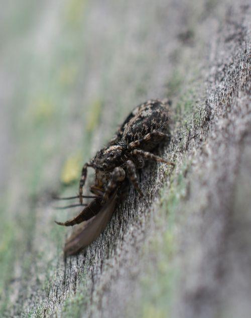 spider victim death