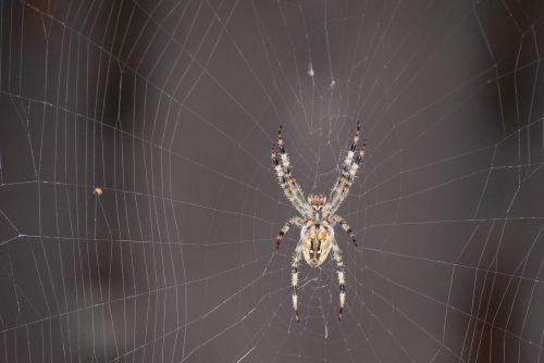 spider hotel cobweb