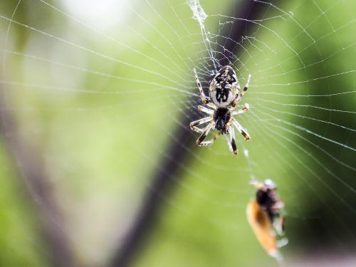 spider nature macro
