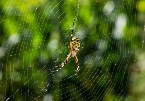 spider animals web
