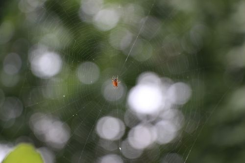 spider cobweb close