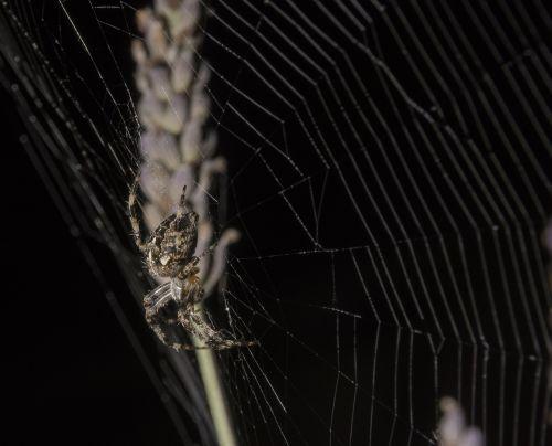 spider orb web