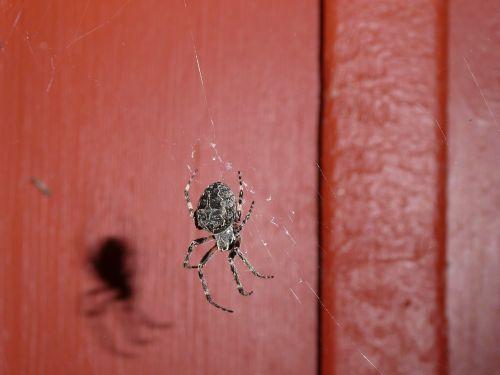 spider climb nature