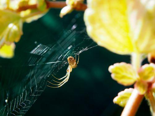 spider cobweb garden