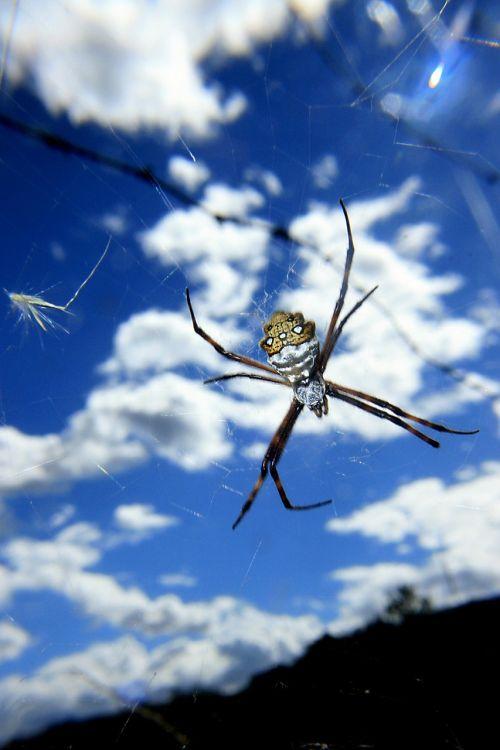spider arachnid predator