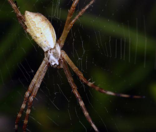 spider macro biology