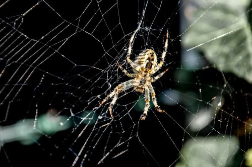 spider network cobweb