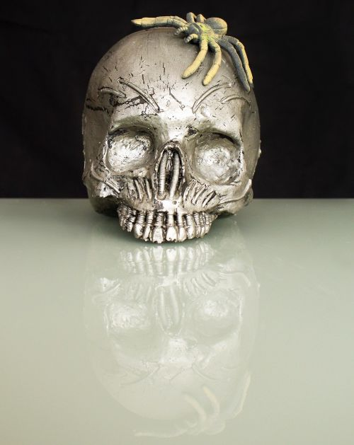 spider skull and crossbones skull