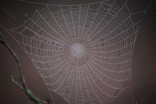 spider web winter