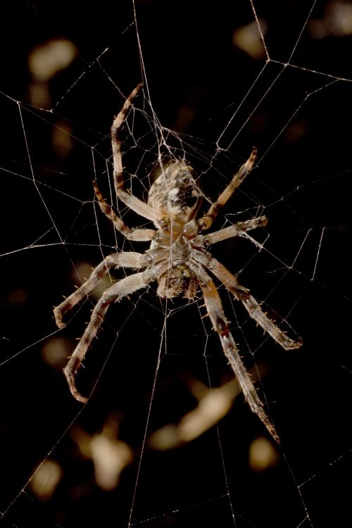 spider night macro
