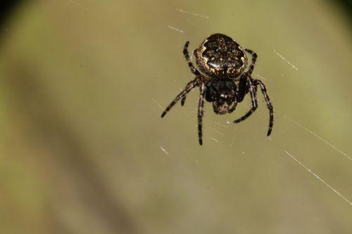 spider network nature