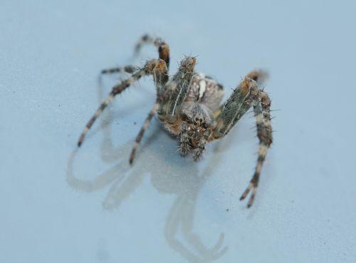 spider arachnids legs