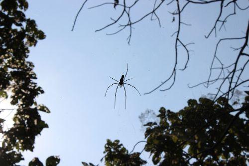spider spider web arachnid