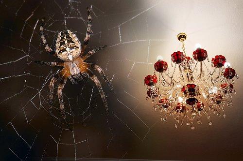 spider  chandelier  macro