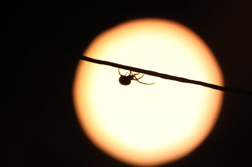 spider  night  insect