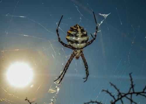 spider  animal  nature