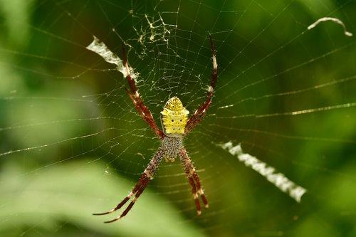 spider  arachnid  web