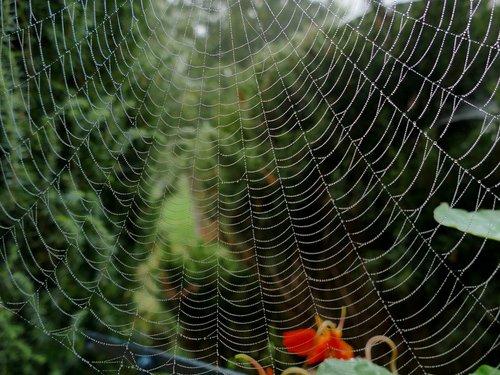 spider  cobweb  hotel