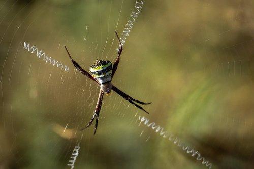 spider  nature  animal