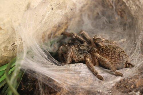 spider  close up  nature