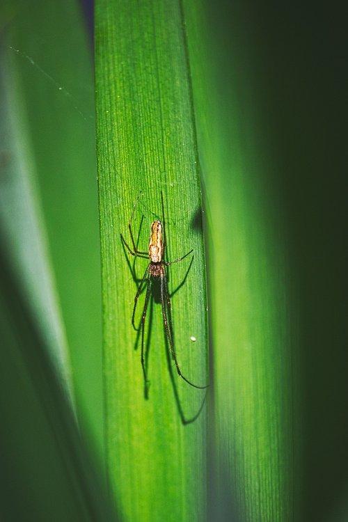 spider  predator  arachnid
