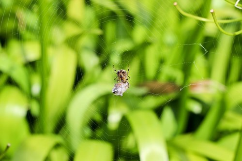 spider  nature  insect