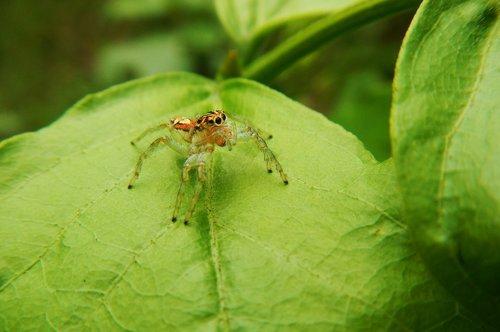 spider  web  predator