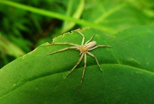 spider  web  tarantula