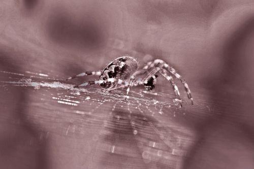 spider garden spider spider macro