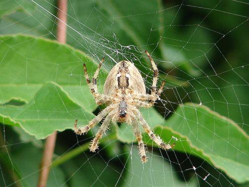 spider cobweb insect