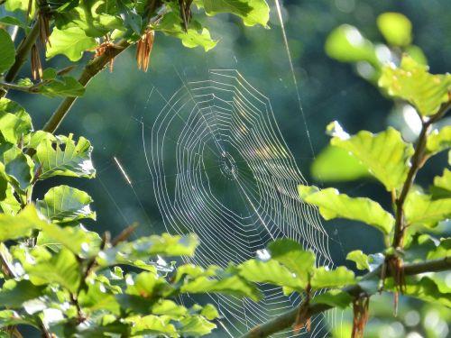 spider cobweb network