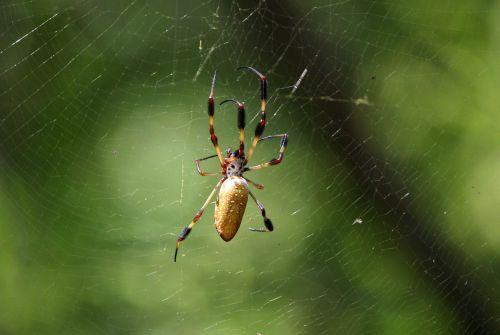 spider web spider web