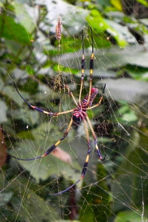 spider nature canvas