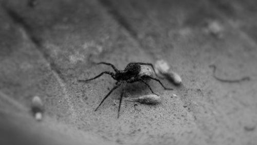 spider legs black