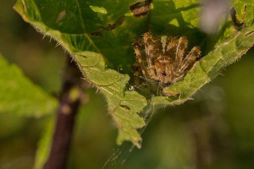 spider lauer position lurking