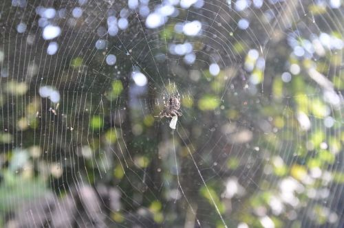 spider cobweb network