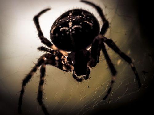 spider spider macro cobweb
