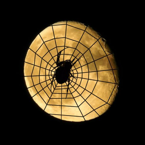 spider moon cobweb