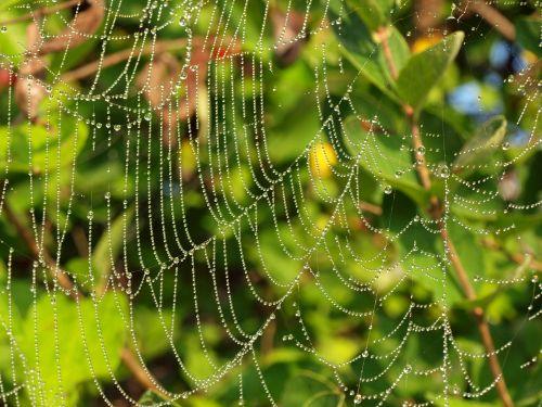 internetas, voras & nbsp, žiniatinklis, vanduo, vanduo & nbsp, lašeliai, graži, trapi, gamta, rūkas, rytas, rasa, voratinklis
