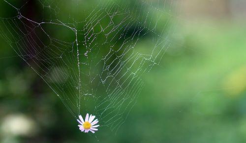 spider web flower hooked