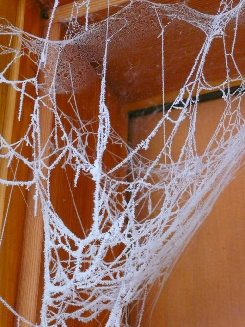 spider web hoary frosty