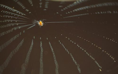 spider web insect socket