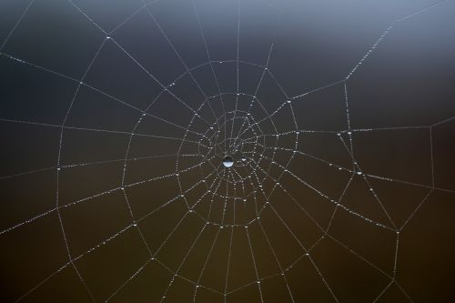spider web wet hooked