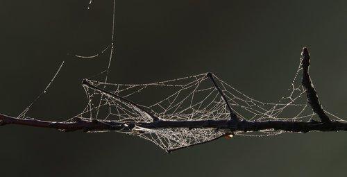spider web  morgentau  drop of water