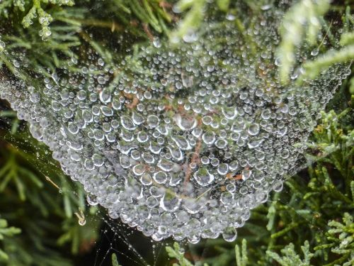 spider web heavy rain loaded