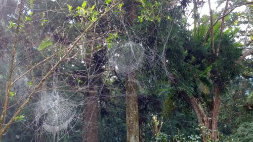 spider web on the mountain those aesthetics